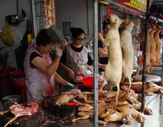Second Chinese city bans consumption of dog and cat meat