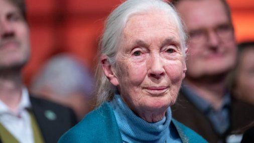 Jane Goodall blames human's 'disrespect' for animals for coronavirus